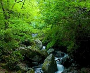 画像 渓流